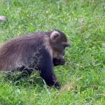 Baboon At The Nairobi National Park