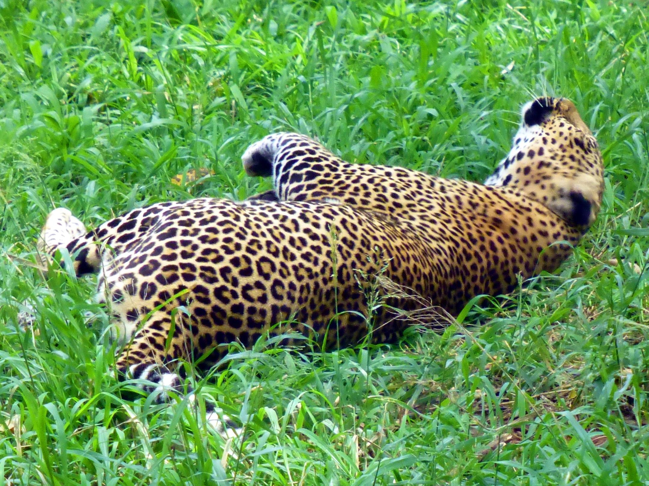 Nairobi Safari Walk - Tips for travelling in Kenya
