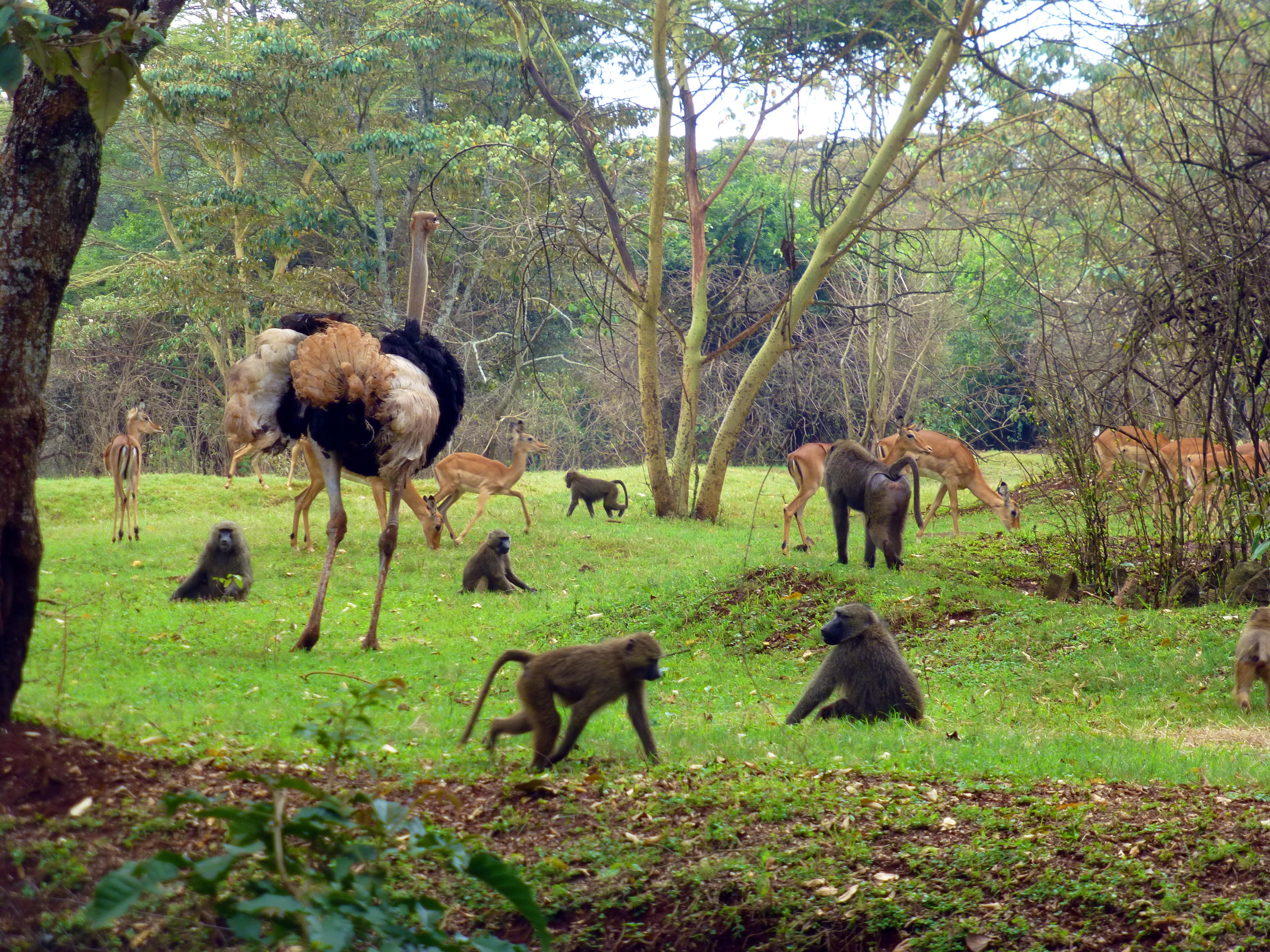 Nairobi Safari Walk Kenyan Moments