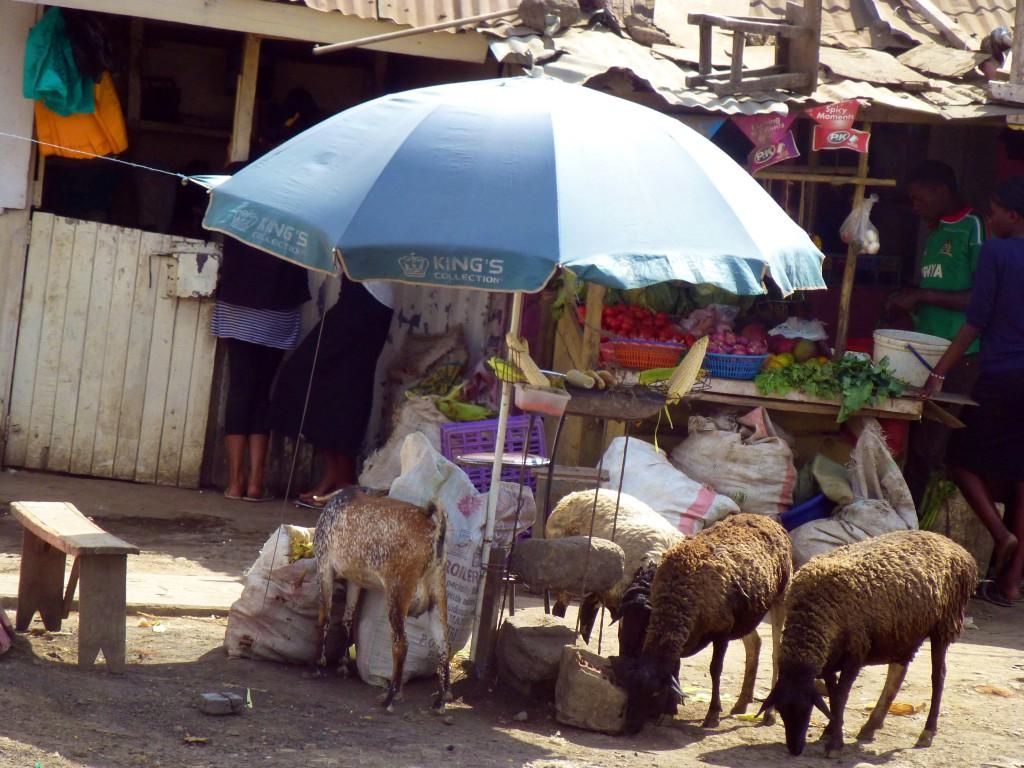 Ongata Rongai - Travelling in Kenya