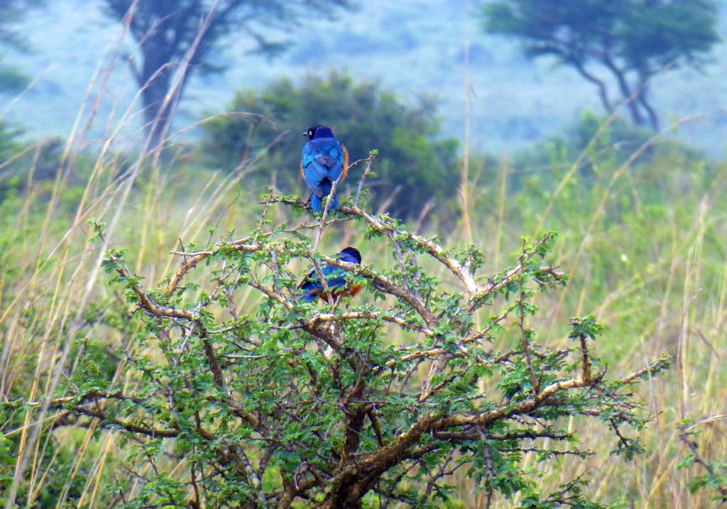 Nairobi National Park - Safari In Kenya