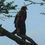 Birds of Prey - Savanna Safari Kenya