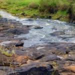 Small Stream in National Park Nairobi