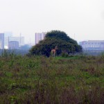 Nairobi National Park - Animals On Nairobi Skyline
