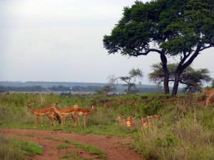 savannah38