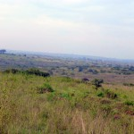 Savanna Views - Nairobi National Park