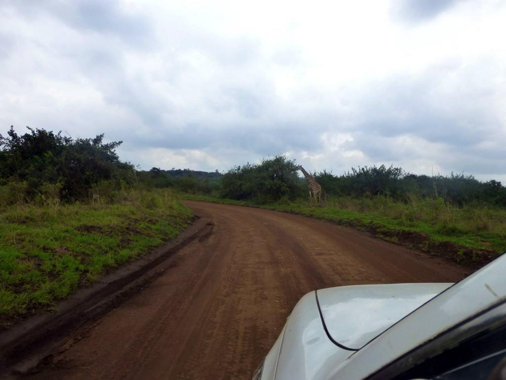 kenya-safari-holiday4
