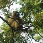 Beautiful Kenya - A Happy Baboon