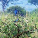 nairobi-national-park-wildlife-birds