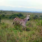 nairobi-national-park-wildlife-zebra