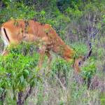 nairobi-national-park-wildlife2