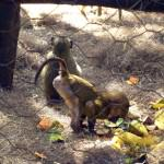 Beautiful Kenya - Orphaned Monkeys