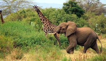 was-ist-eine-safari